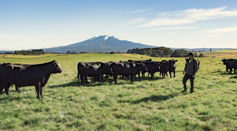 Awhi Farms Beef from Ruapehu